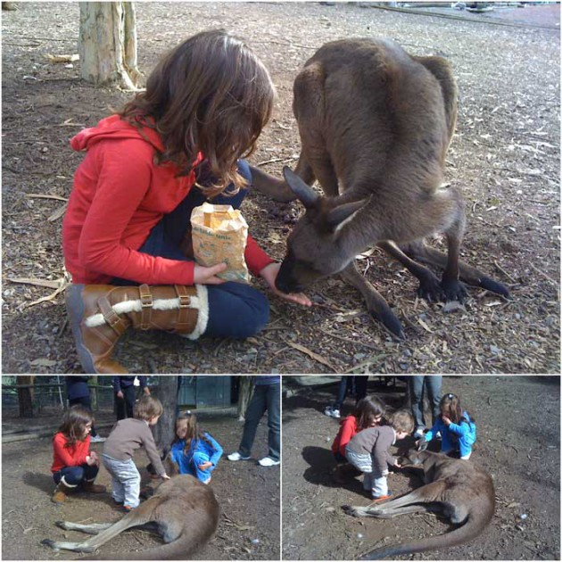 The Big Rocking Horse feeding animals