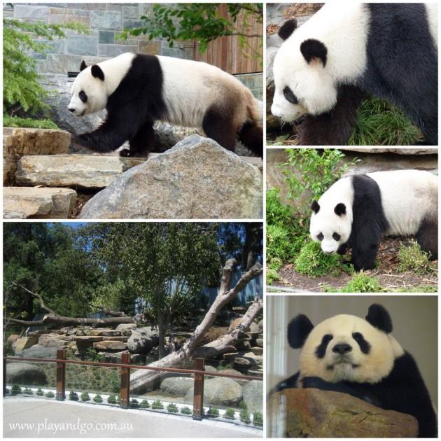 Adelaide-Zoo-2a