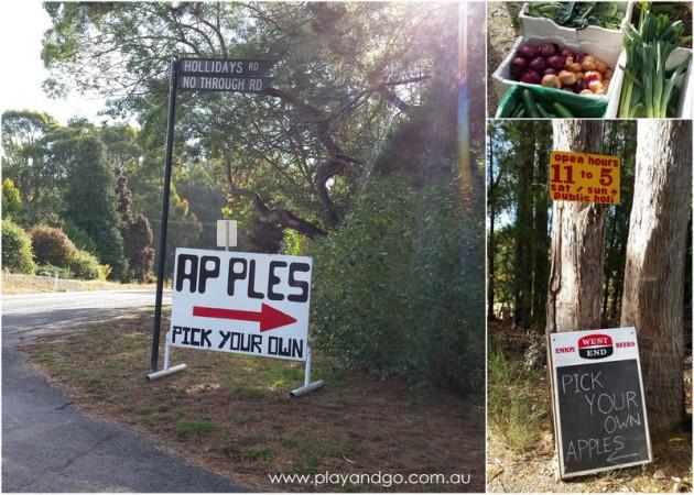 apple picking summertown 2015 (5)