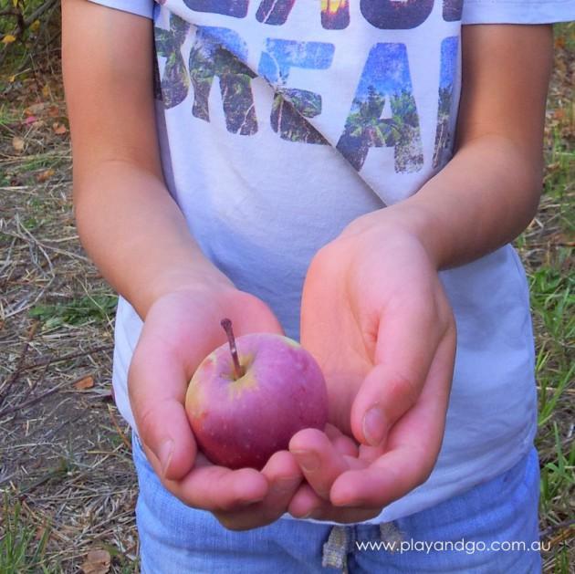 apple picking summertown 2015 (6)