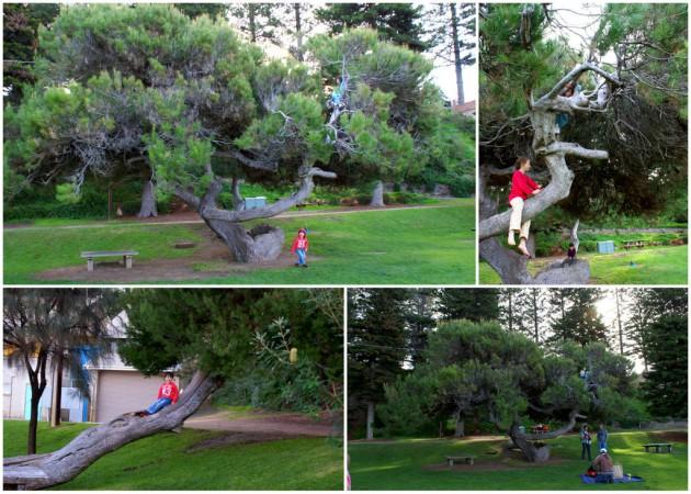 3-Horseshoe Bay tree climbing