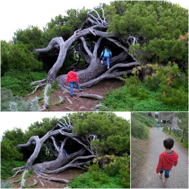 9-Pt Elliot Horseshoe Bay trees