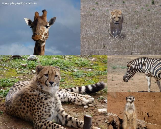 Monarto-zoo-collage-5