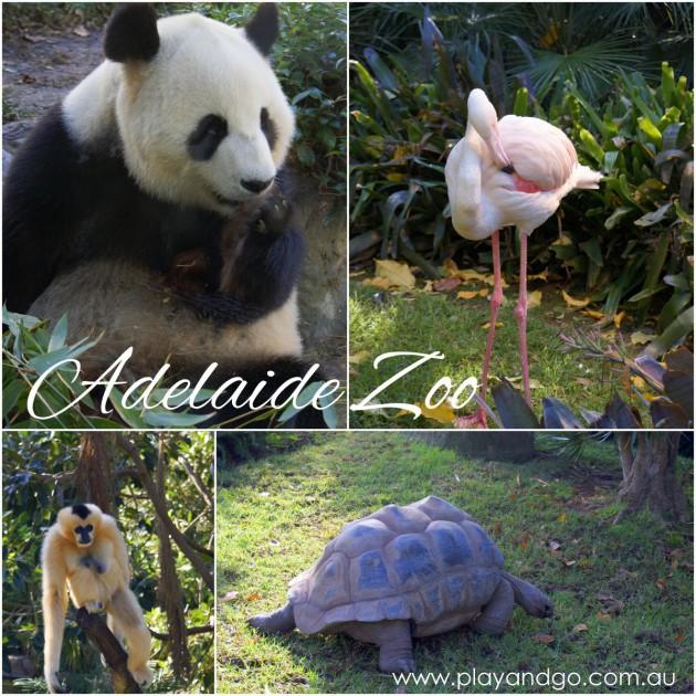 Adelaide Zoo animal collage-001