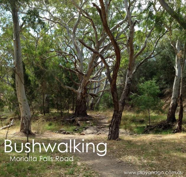 Morialta Conservation Park Review