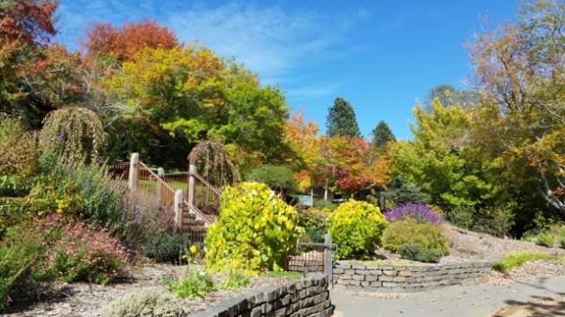 Mount Lofty Autumn