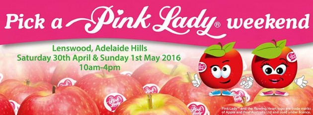 pick a pink lady apple lenswood apples