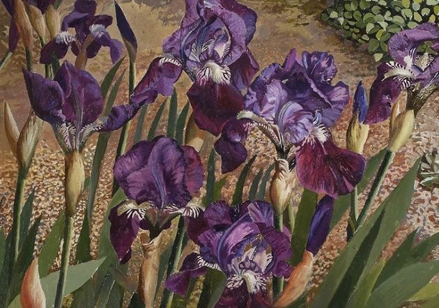 Stanley SPENCER - Blue Iris CROPPED_event-detail
