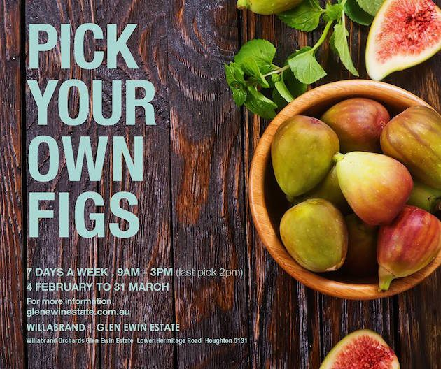 pick your own figs