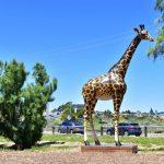 jubilee playground giraffe