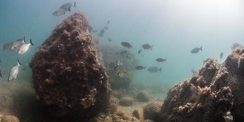 snorkel hallet cove reef