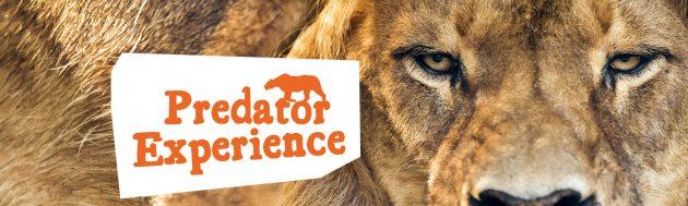 Monarto Zoo Predator Experience