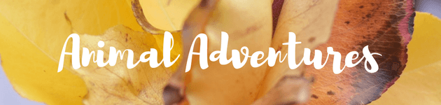 Animal Adventures autumn school holiday