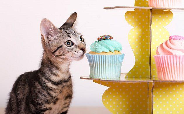 rspca cupcake day 2