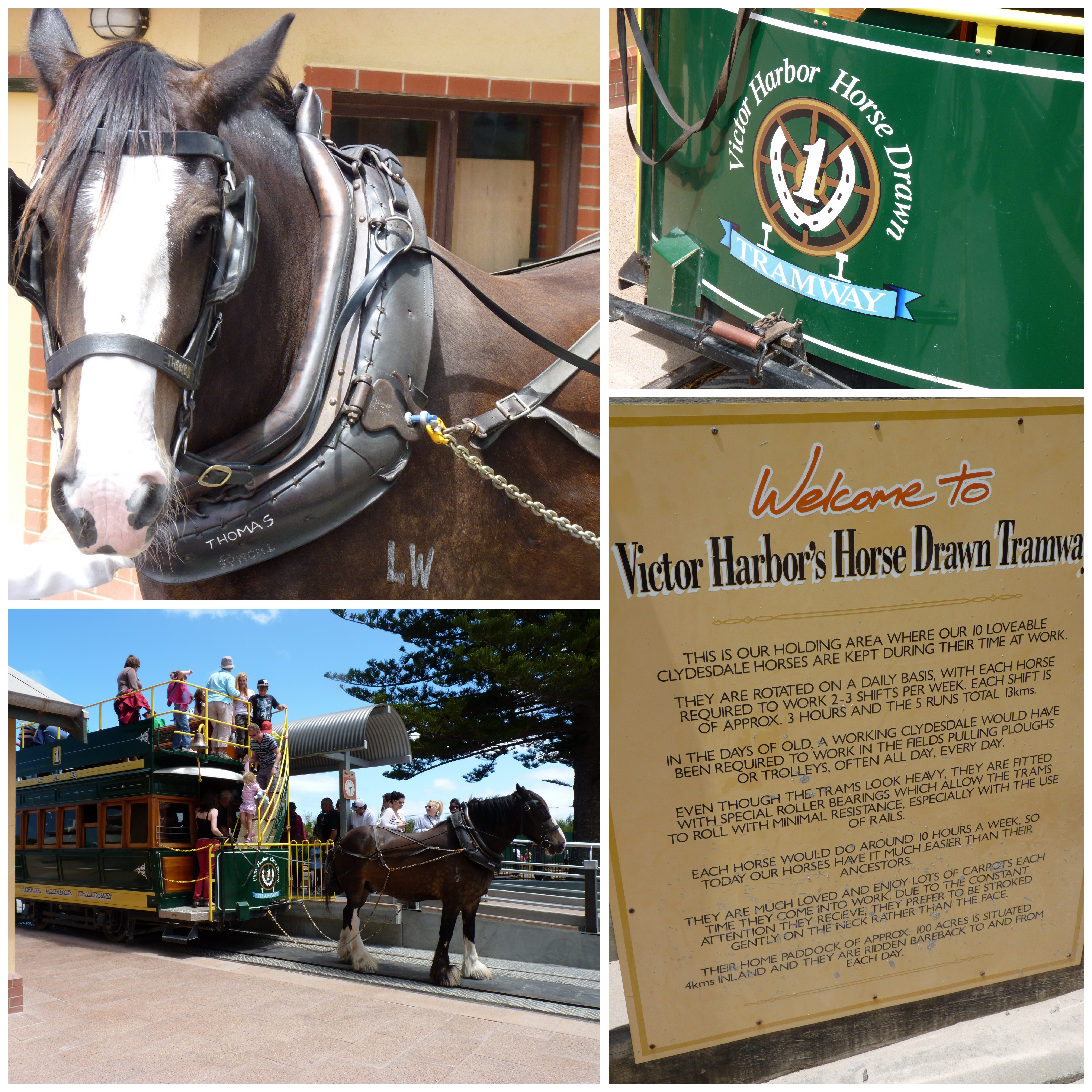 horse drawn tram at victor harbor | step back in time