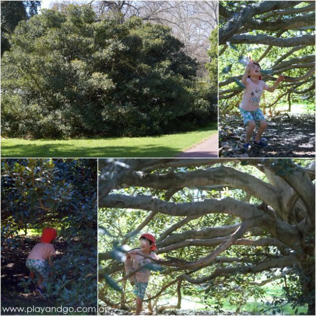 Botanic Park inside tree