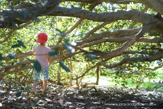 botanic park inside tree 2
