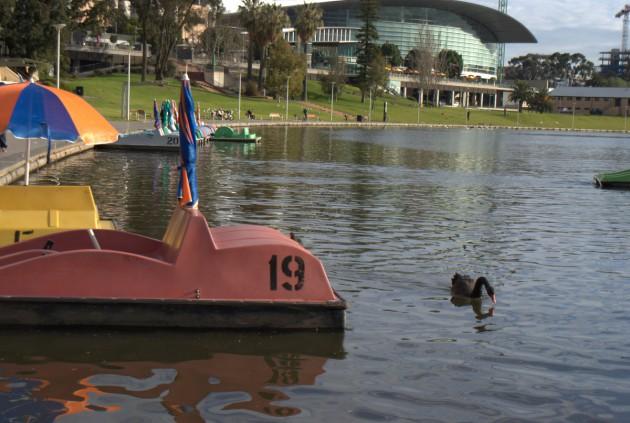 Paddleboats Elder Park