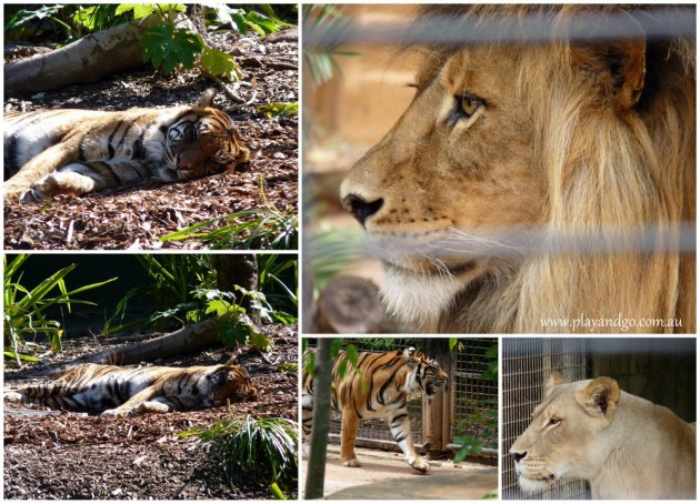 Great Ideas for Screen Free Time with Kids - Adelaide-Zoo
