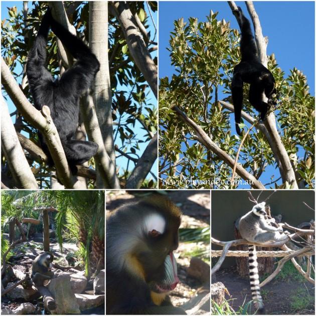 Adelaide-Zoo-4a