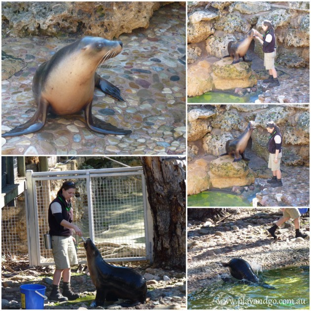 Adelaide-Zoo-5a