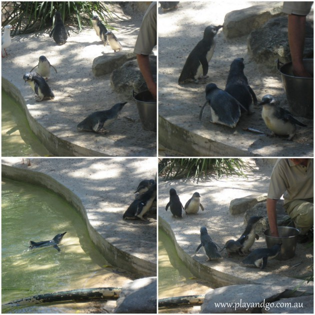 Adelaide-Zoo-6a