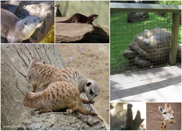 Adelaide-Zoo-8a