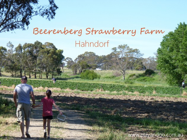 Beerenberg Farm strawberry farm