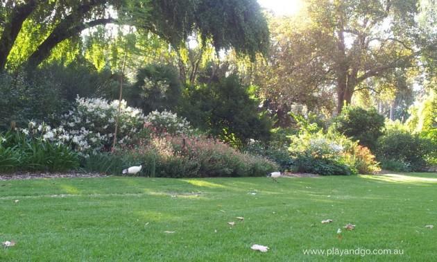 Minifigs at Botanic Garden (6)