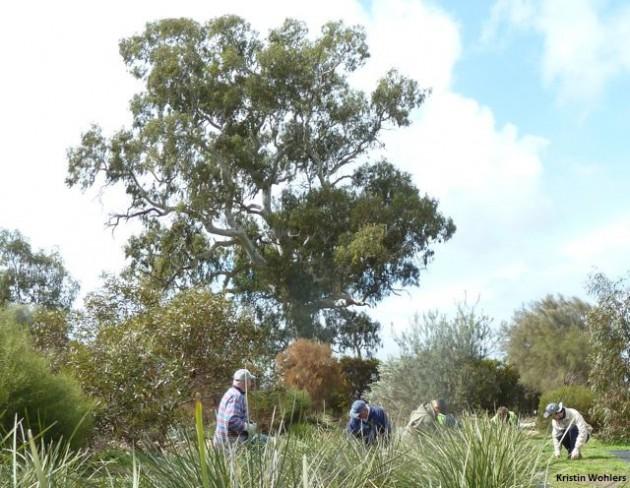 barossa-bushgardens