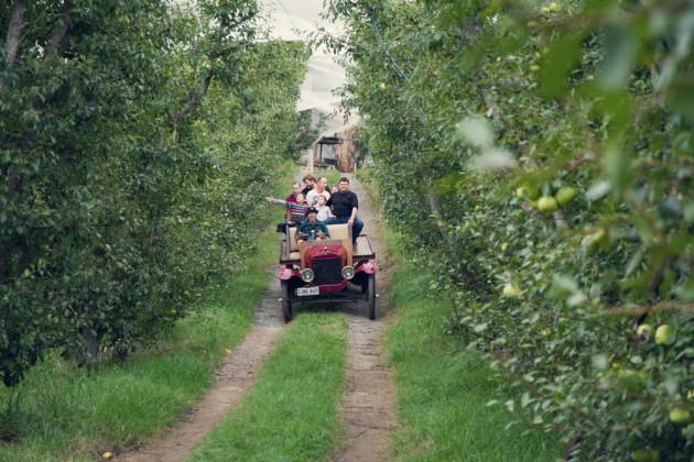 magarey-orchard-pic2