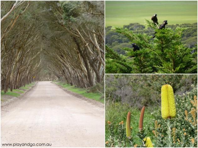 Kangaroo Island 2