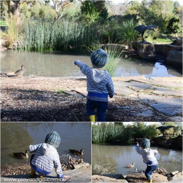 Waite Arboretum5