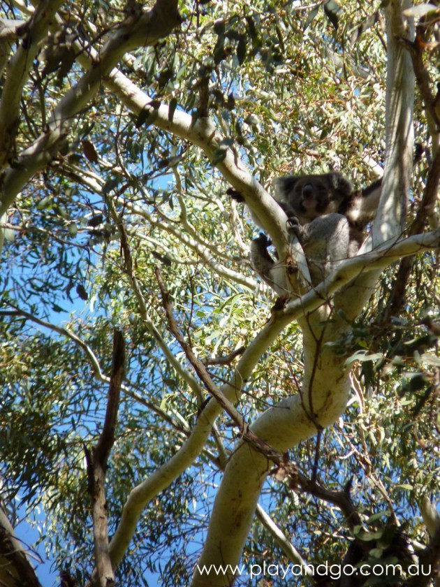 Morialta Conservation Park Review