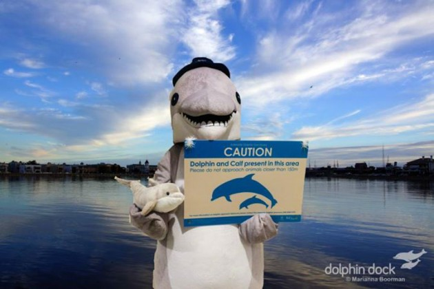 dolphin-day-2015b