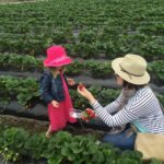 Mt Compass Strawberry picking