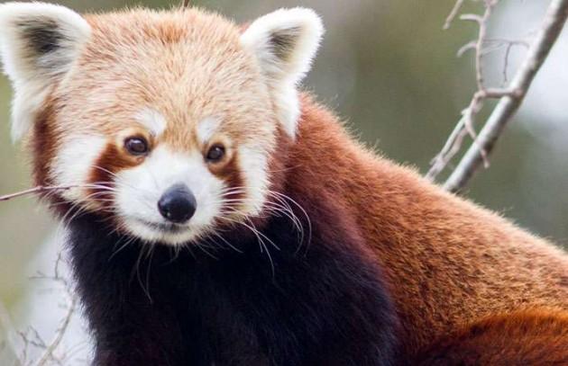 panda-and-friends