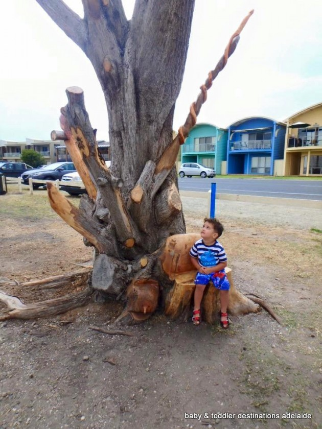 goolwa nature park tree
