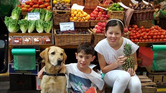 Guide Dog SA