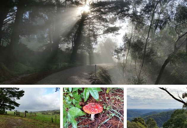 Winter collage with toadstool