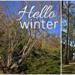 Mt Lofty Botanic Garden Hello Winter