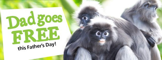 Free Adelaide Zoo entry for dads