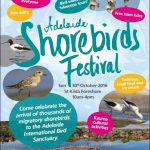Adelaide Shorebirds Festival