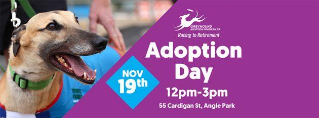 Greyhound Adoption Day