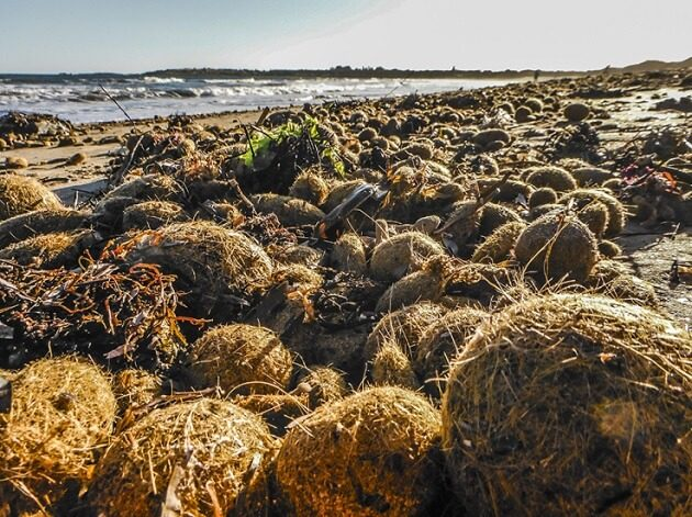 seaweed balls pt elliot