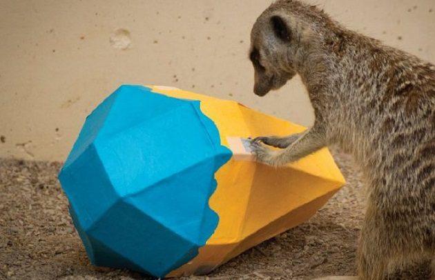 animal playday