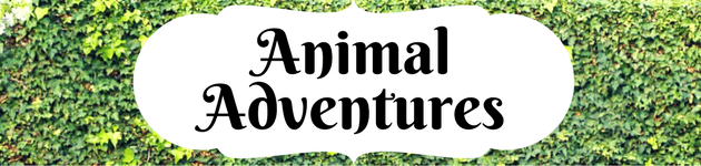 October School holidays animals