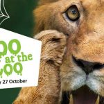 boo-at-the-zoo halloween adelaide