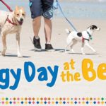 doggy day henley beach