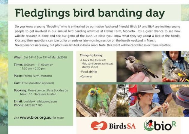 fledglings bird banding day